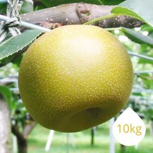 幸水 10kg (24~32玉)
