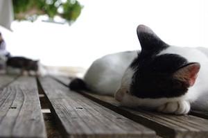 【PHOTO】竹富島のある日の風景(猫)