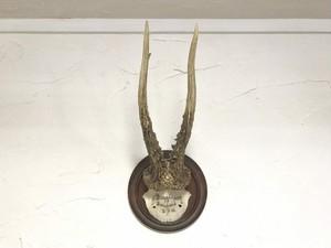 【送料無料】ドイツ製 ハンティングトロフィー 頭骨 鹿 角〔C〕