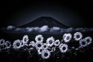 SONY銀座 個展開催記念価格 2Lプリント【Sunflower, cloud and the Mt Fuji:ひまわり, そして雲に富士】
