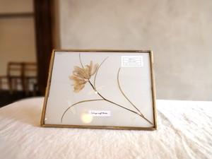 植物標本 ■押し花フレーム■フリチラリア メレアグリス