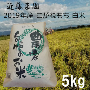 2019年 新潟県産 令和1年産 こがねもち 白米 5kg 近藤菜園