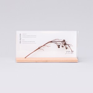 1056_ウツギの枝