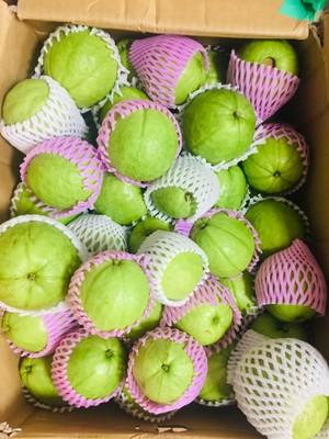Okinawa guava 1kg