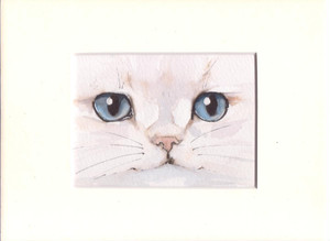 水彩画 猫