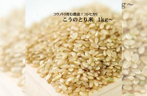 こうのとり玄米(1kg) 農薬不使用 こうのとり育む農法 有機肥料 特別栽培 令和2年産 兵庫県産 コシヒカリ