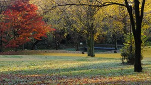 [4K] Autumn Leaves / Fall Colors - Nogawa Park (Tokyo)