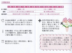 【定番】胡蝶蘭 6号3F(椎名洋ラン園 産直)濃ピンク・ピンク・薄ピンク・白・黄色・アプリコット