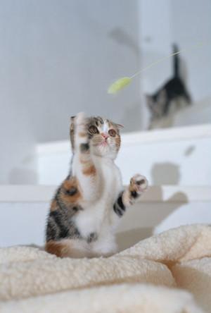 猫ポストカード(12)