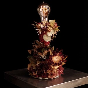 Protea red lamp