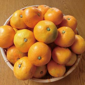 柑橘王国愛媛の方にも愛されるみかん 10kg