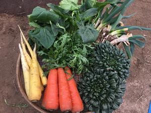 固定種オンリー/Open pollinated veggie only