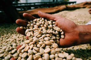 コーヒー豆定期便 6ヶ月【リッチビター 深煎り】300g/月 (約20杯分)