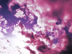 夕陽 (紫) 3
