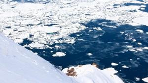 北海道写真素材:知床の流氷 (5)