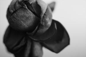Rose Noir  #12