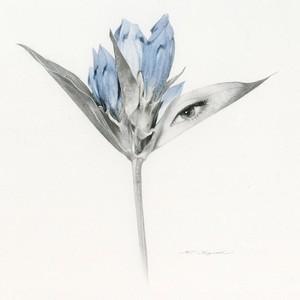鉛筆水彩画:青い花