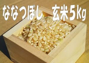 ななつぼし 玄米5kg