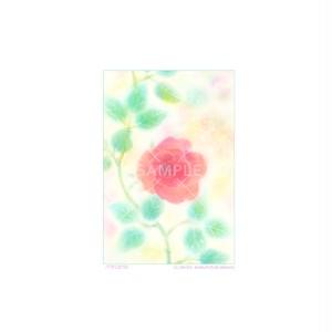 【選べるポストカード3枚セット】No.156 2017バラ
