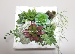 Botaniqueシリーズ第2段!Botanique square frameキット販売!