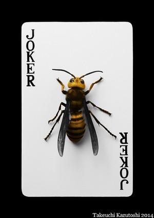 a hornet 2014