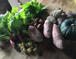 旬野菜のセット ライト