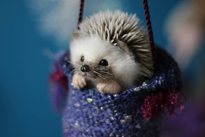 Dangling Hedgehog