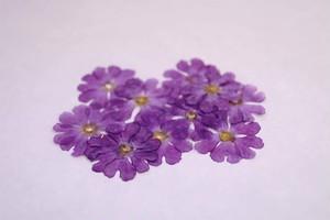 DRY EDIBLE FLOWER[ プリムラ・Pink ]