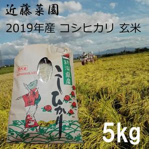 2019年 新潟県産 令和1年産 コシヒカリ 玄米 5kg 近藤菜園