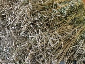 古代小麦のパンご予約開始(10月中旬より販売開始の予定です)