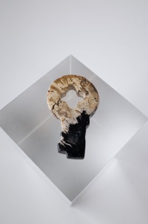 Palm root fossil  Key Stone