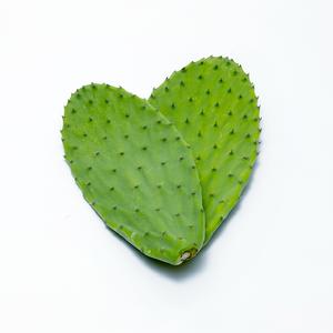 食べるサボテン 太陽の葉 フレッシュリーフ 食用サボテン(1kg)
