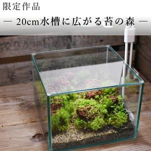 作品名− 20cm水槽に広がる苔の森−【苔テラリウム・現物限定販売】20.07.21#4