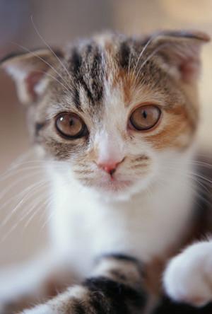 猫ポストカード(11)