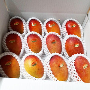宮古島産 B品 訳あり 完熟アップルマンゴー5kg (10~12玉)12~13度以上 新鮮 宮古島産マンゴー