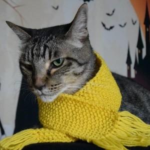猫専用マフラー:みゃふら~(手編み:黄色)