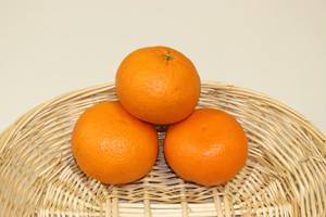 カリフォルニア産 オレンジ (1P 2個)