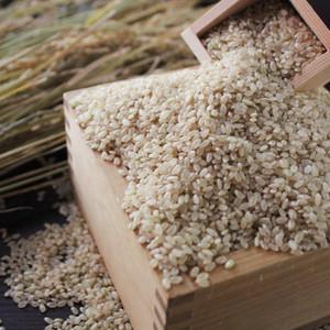 美し米 美山産コシヒカリ 玄米2 kg