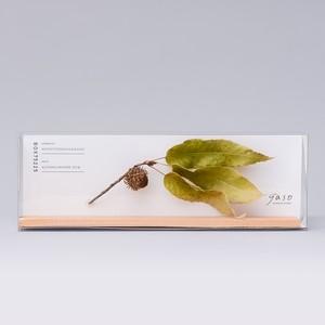 1246_クヌギの枝