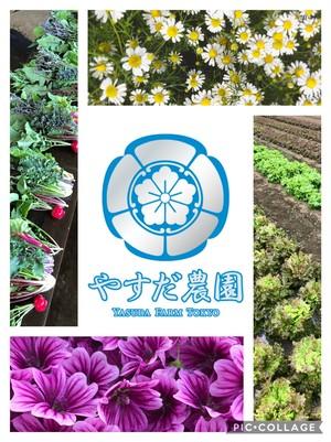 お任せ野菜セット『春色』M80サイズ
