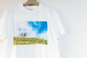 空と牛さんTシャツ
