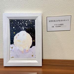 アナログ原画【星空を見上げるモルモット】