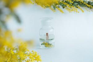 BOTANICAL BOTTLE/ Mimosa/ ミモザ