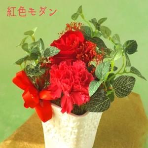 大好きな人に 感謝を込めて赤い花を贈ろう
