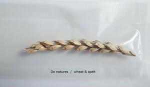 スペルト小麦(殻付)