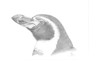 名取千春 ポストカード モノクロシリーズ フンボルトペンギン