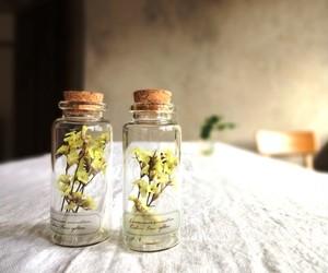 植物標本 Botanical Collection■No.2-A スターチス ファインイエロー