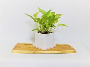 天然木花台・飾り台  KD-10桑の天然木