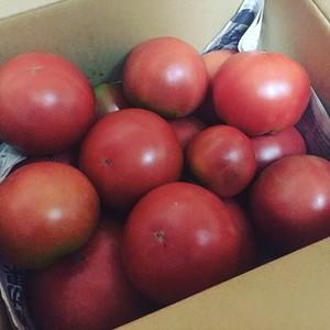 減農薬 トマト 約3kg 12個〜