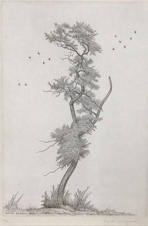 長谷川 潔「アカシアの老樹」